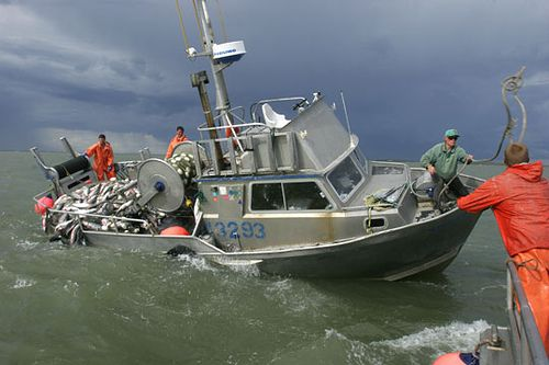 20 best images about fisheyyyy on pinterest for Bristol bay fishing