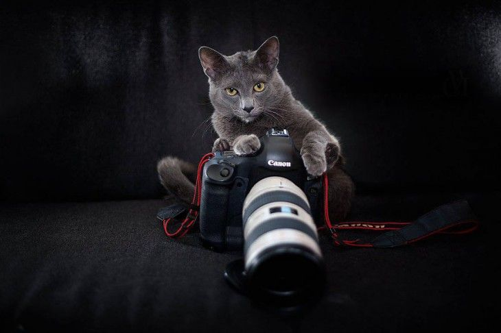 25 Animales que quieren ser fotógrafos