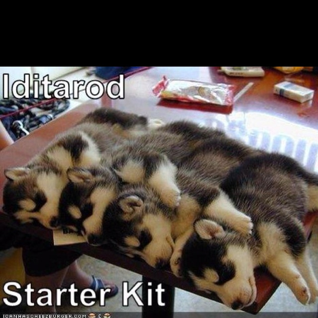 Iditarod starter kit! I'll have to get me one of these.