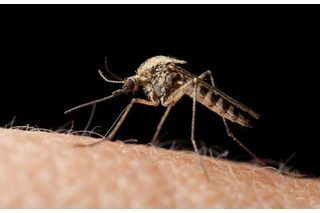How to Make a Homemade Mosquito Killer (with Pictures) | eHow