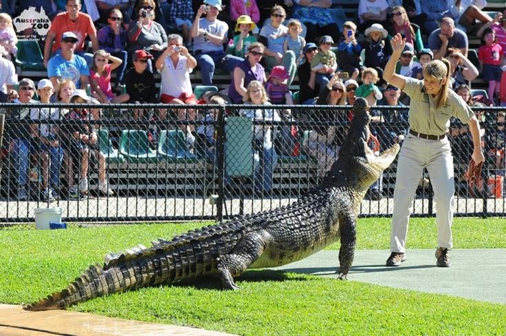 Terri Irwin feeding a croc at Australia Zoo