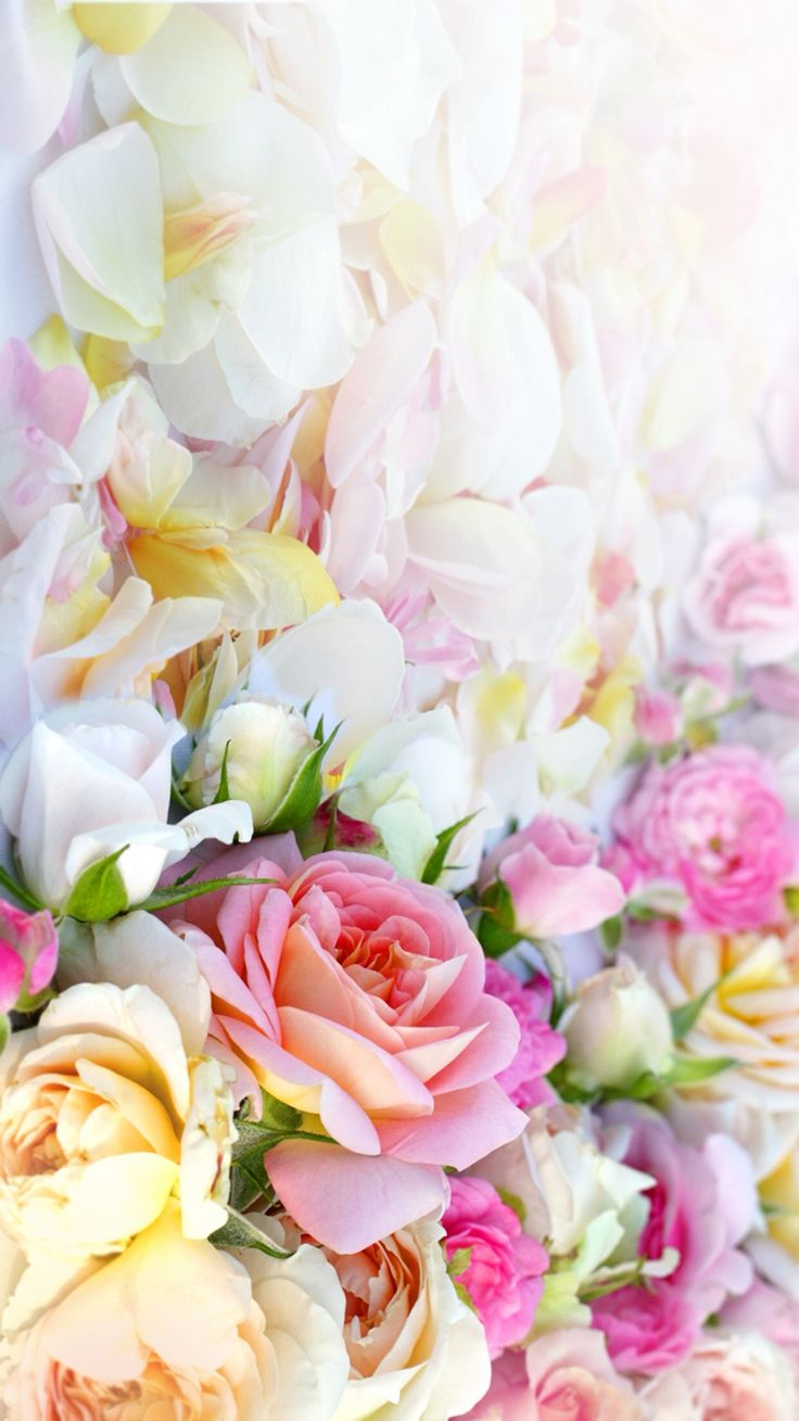 Pink yellow white pastel flowers roses floral iphone wallpaper phone background lock screen
