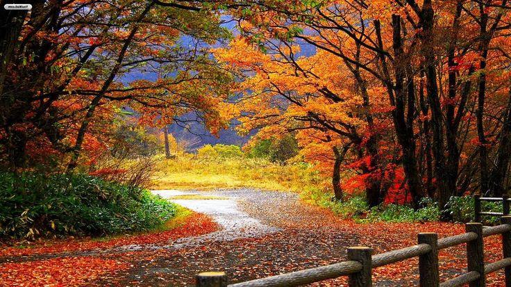 Gambar Musim Gugur Yang Indah