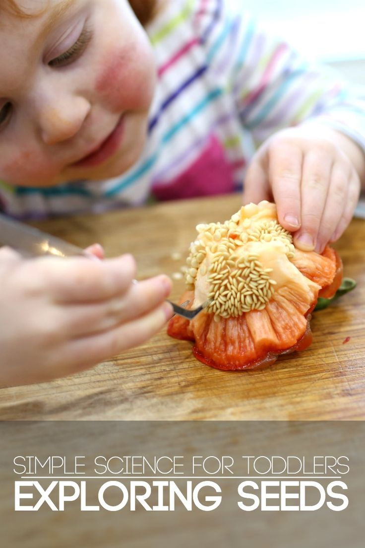Exploring Vegetable Seeds   Simple Science for Toddlers - no prep time needed! Kids can have fun while you cook dinner!