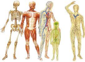 Los efectos del masaje son aquellos que se derivan de su aplicación y como repercutirán sobre las diferentes estructuras corporales.  Al aplicar una técnica de masaje, no solo se producen efectos sobre el sistema muscular, sino que también repercuten en todos los sistemas de órganos del cuerpo humano, principalmente en el sistema nervioso central.  Cuando se trata de una irritabilidad nerviosa común y cambios en el estado de la corteza cerebral, los efectos dependen de la intensidad y duraci
