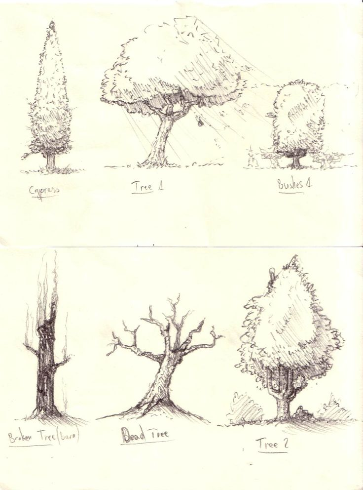Trees And Bushes Sketches Drawing Tutorial Pinterest Sketches Search