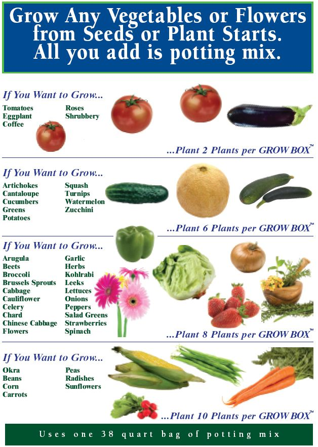 What To Grow in Grow Box: Vegetables Garden