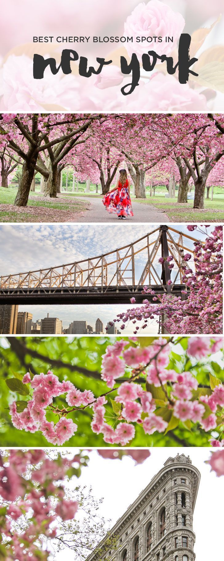 Best Places To See Cherry Blossoms In Nyc Cherry Blossom Places To See Cherry Blossom Festival