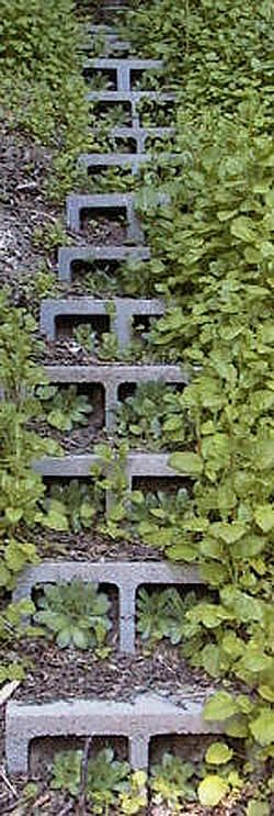 Hadn't seen cinder block steps before. Love the idea of planting inside for living steps!