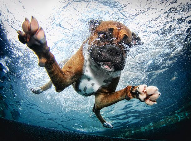 17 Best Ideas About Dog Swimming Pools On Pinterest Dog Rooms Dog Beds And Cute Dog Stuff