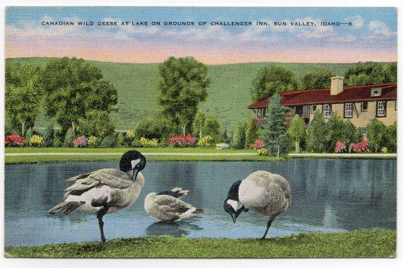 Sun Valley Idaho Challenger Inn Vintage Postcard by Rosie247