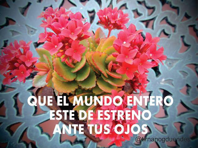 http://tirnanogduendes.blogspot.com.ar/2014/12/estrenando.html