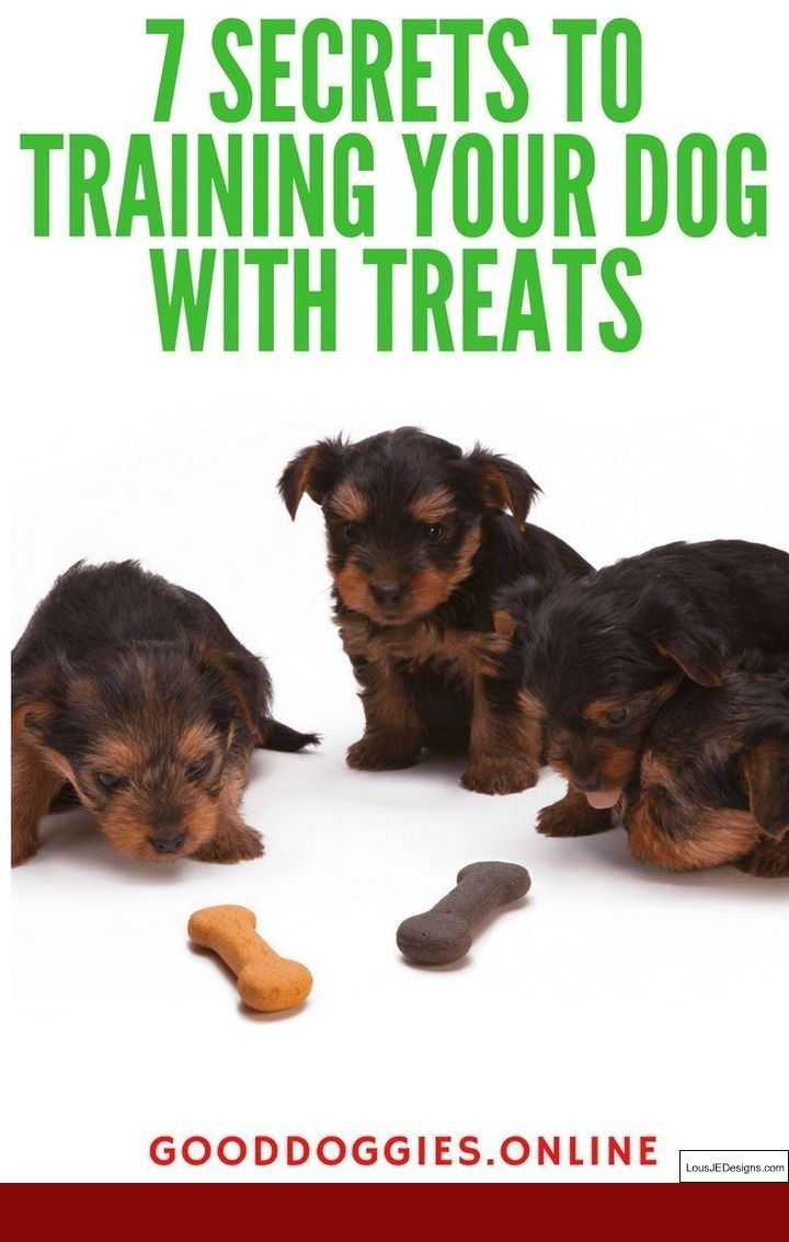 Potty Training Tips For Puppies And Pics Of How To Train Your Dog