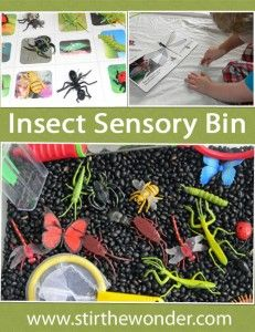 Insect sensory bin with extension activities to learn about insects