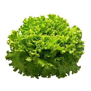 14 best images about Lechugas on Pinterest | Kale, Colors