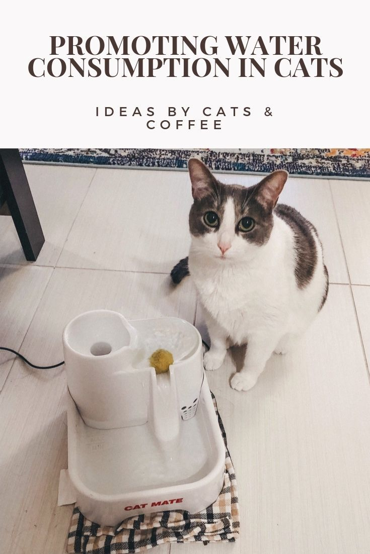 Cat Mom Life Promoting Water Consumption In Cats Cat Mom Cat Coffee Cats