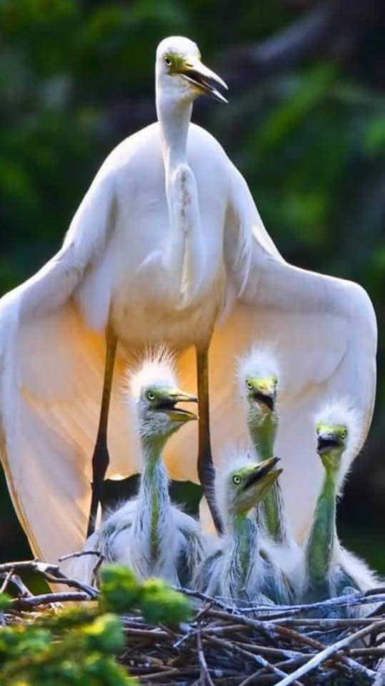 No details on name of bird shown.  Beautiful shot.  http://touchn2btouched.tumblr.com/image/130799137349