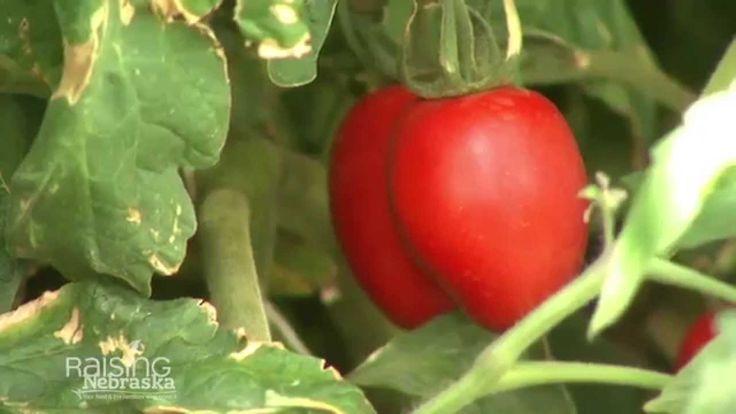 Are GMO's A-OK?
