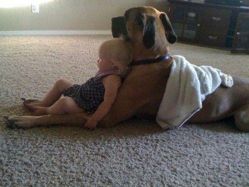 so cute!!!: Great Danes, Lounges Chairs, Best Friends, Bestfriends, Pet, Puppy, Kids, Big Dogs, Animal
