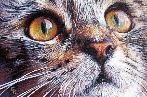 Tabby-Look 2 Kunstdruck von Elena Kolotusha