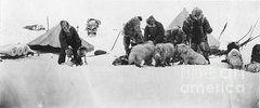 Fridtjof Nansen Featured Images - Fridtjof Nansen (1861-1930)  by Granger