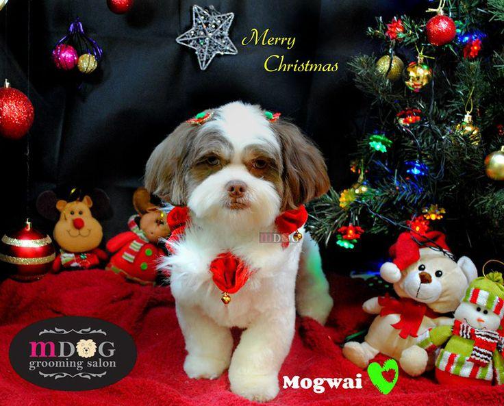 Merry Christmas Mogwai!