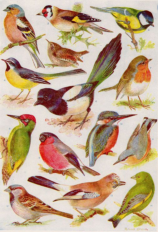 Vintage Bird Print Natural History Antique by VintageInclination