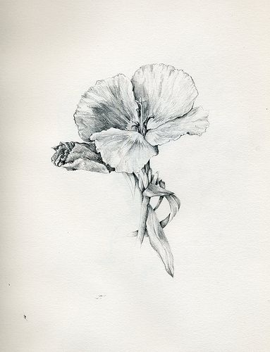 Dibujos botánicos | por Patricia Domínguez