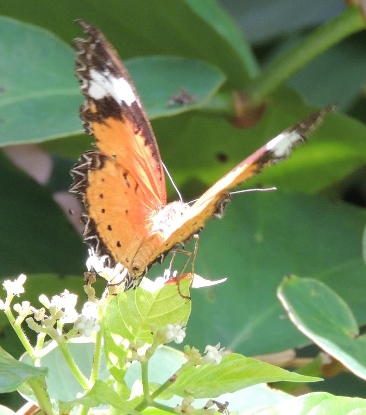 Butterfly Garden Gainesville Fl Butterfly Pinterest