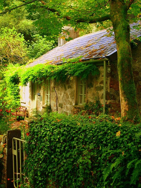 WALES: Old Welsh Cottage...Fachwen, North Wales. UK. This cottage is surrounded by woods, you can smell the moss and the tree's as you walk by. A little piece of Wales that time has forgotten.