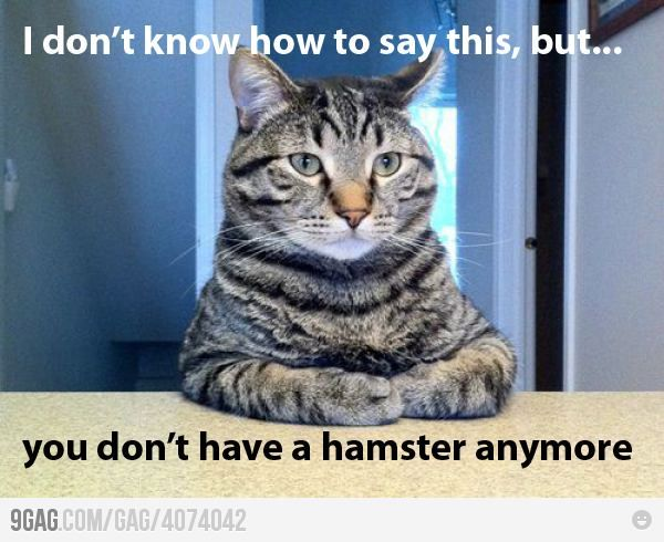 I really think my cat is going to tell me this about our bird!