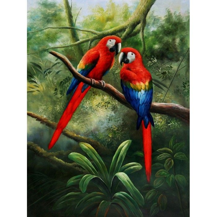 1000 images about amazon parrots on pinterest scarlet for Oil paintings for sale amazon