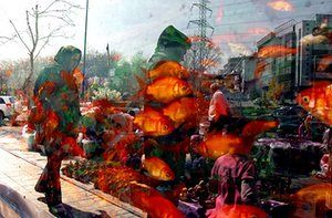 Tehran, Iran: People are reflected in the window of a shop selling goldfish before the celebrations begin Photograph: Atta Kenare/AFP/Getty Images