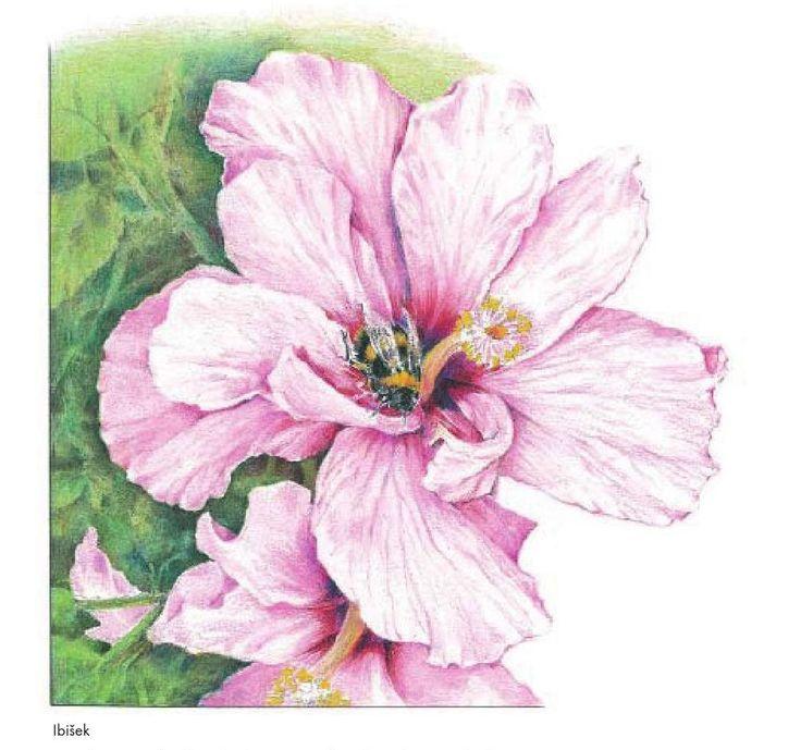 #ClippedOnIssuu from Naučte se kreslit a malovat květiny barevnými pastelkami