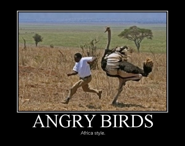 Angry Birds - African syle!