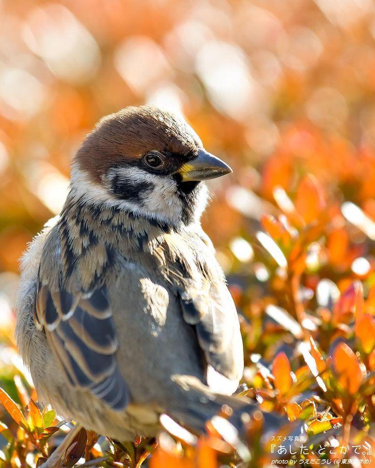 ♥♥♥Little sparrow♥♥♥