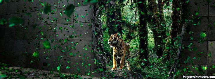 Tigre en naturaleza - ÷ Las Mejores Portadas para tu perfil de Facebook ÷