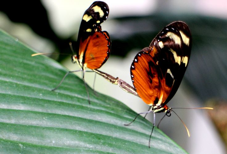 Schmetterlinge butterflies
