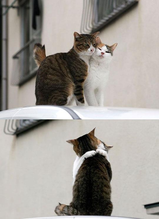 """It's ok baby, let's hug it out..""It Ok, Hug, Baby, Animal"