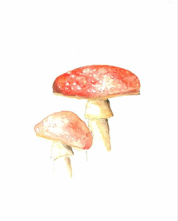 Original Watercolour Toadstool Painting Home Decor 8x10