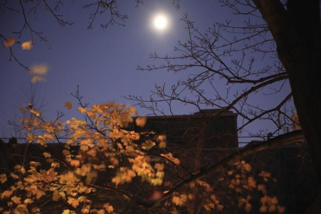 Learn About November's Mourning Moon: Use November's full moon to shed the baggage of last year.