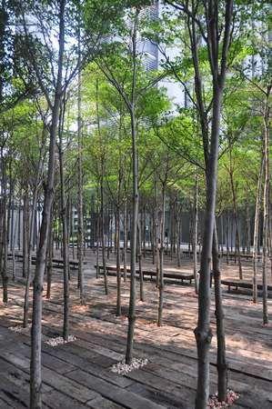 107 best urban space landscape images on pinterest for Forest landscape design