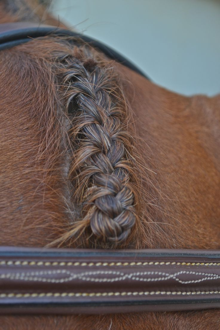 theclearlyobscure1: Buddy's perf braid<33 - Horsing Around