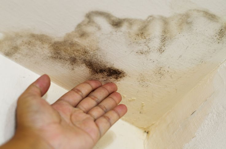 45 best MOLD can make you SICK images on Pinterest | Mold ...