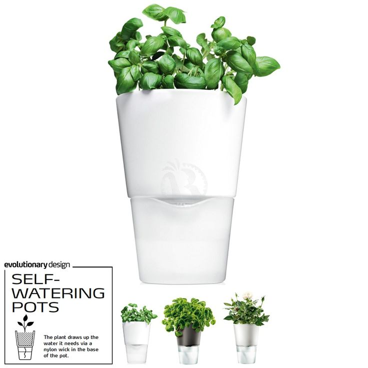 Awarded Design Vase Eva Solo Self Watering Herb Pot Color Frosted Gl