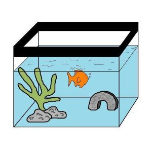 Water changes are a key part of proper goldfish care. Find out how often you should do a water change, and how much water to change each time, right here!