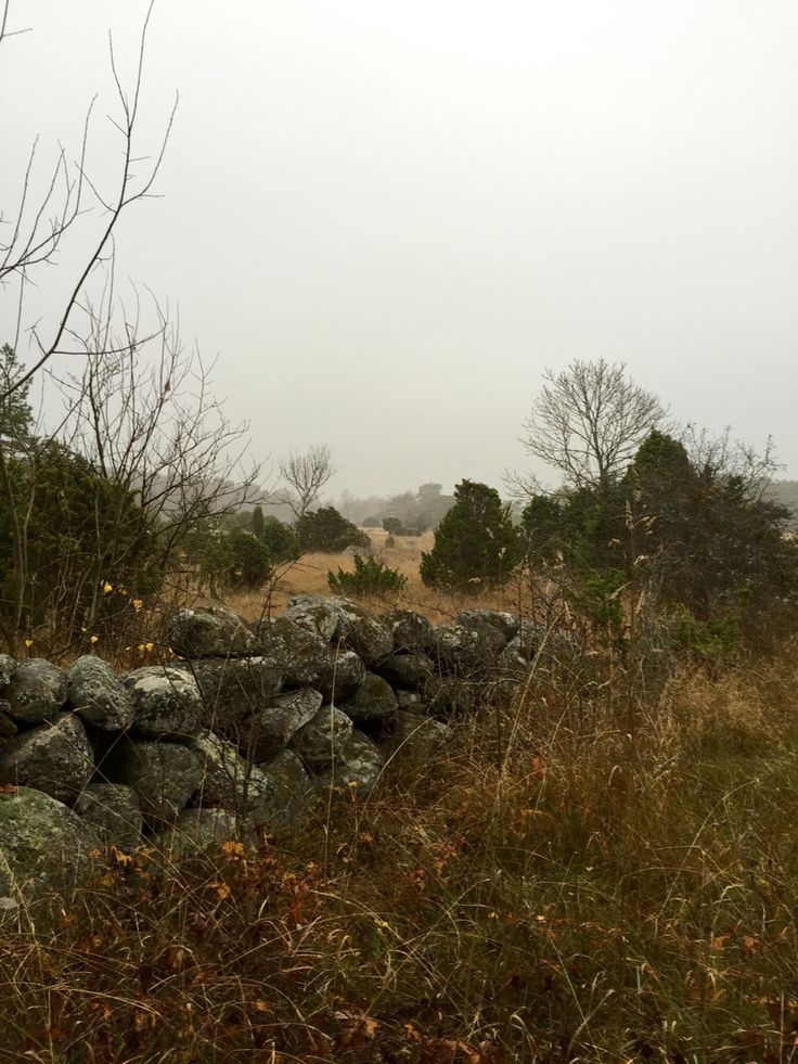 Gotland at fall