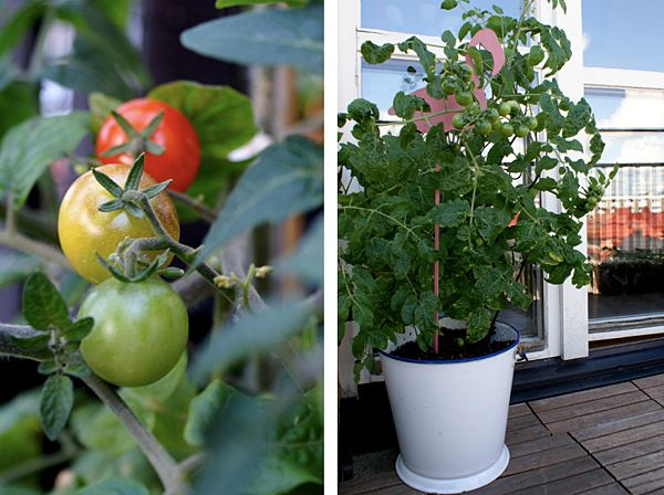 71 best images about balkong v xter och stuff on for Indoor gardening for dummies