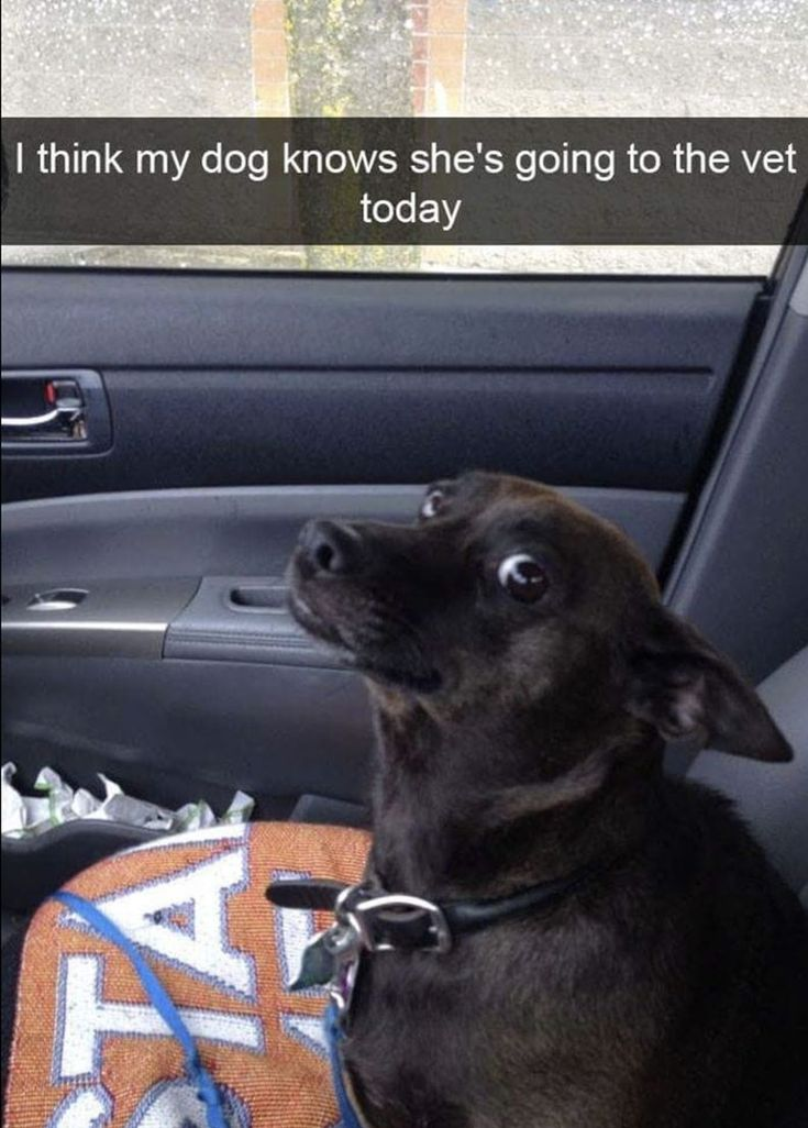 40 Memes About Dogs