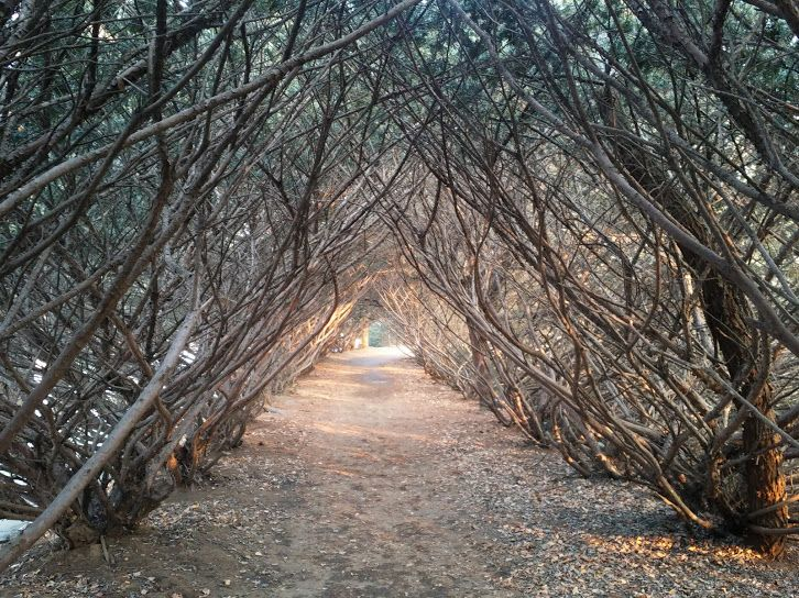 "Google+""우리가 지금 가는 이 길은 동굴이 아니라 터널일 뿐이다."""
